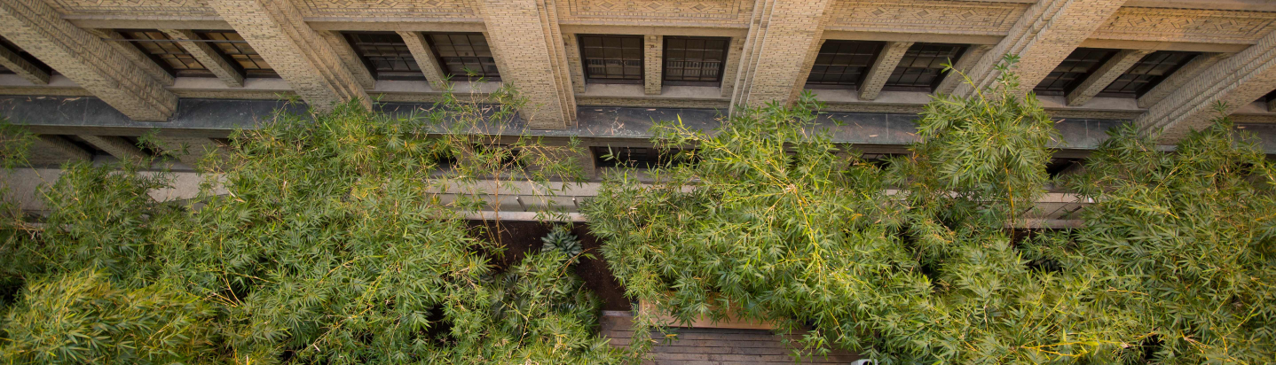 bamboo_garden_masthead_1